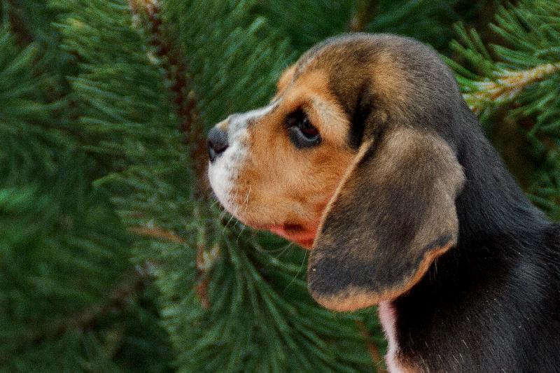 http://beaglebase.ru/ph/10955-1.jpg