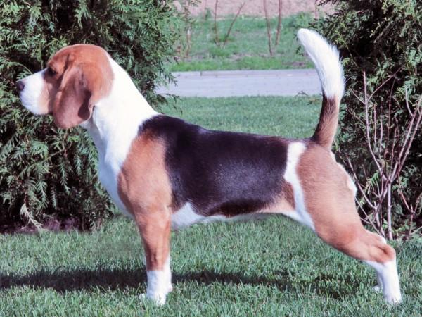 http://beaglebase.ru/ph/410-0.jpg